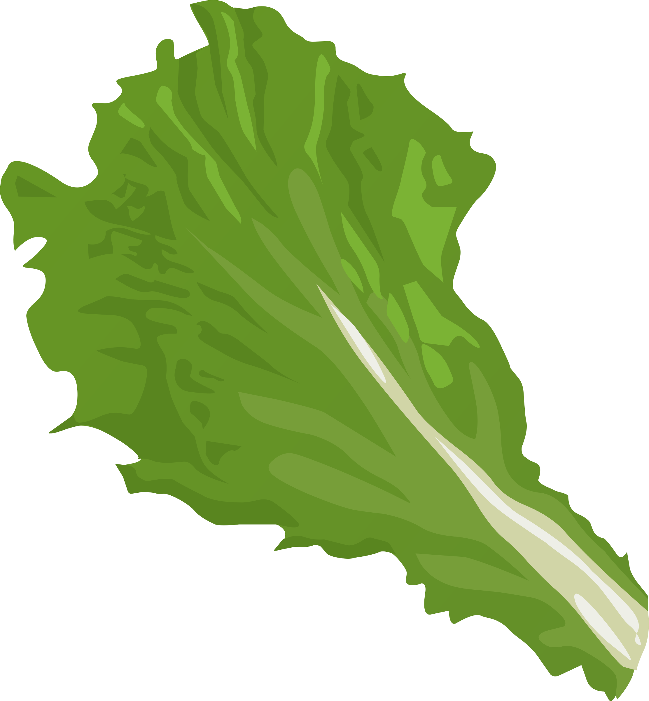 Food green leaf icons. Vegetables clipart cabbage