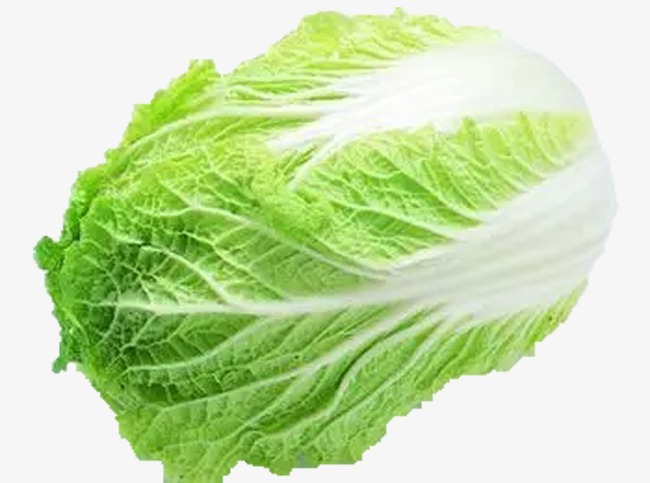 Vegetable products in kind. Cabbage clipart green food