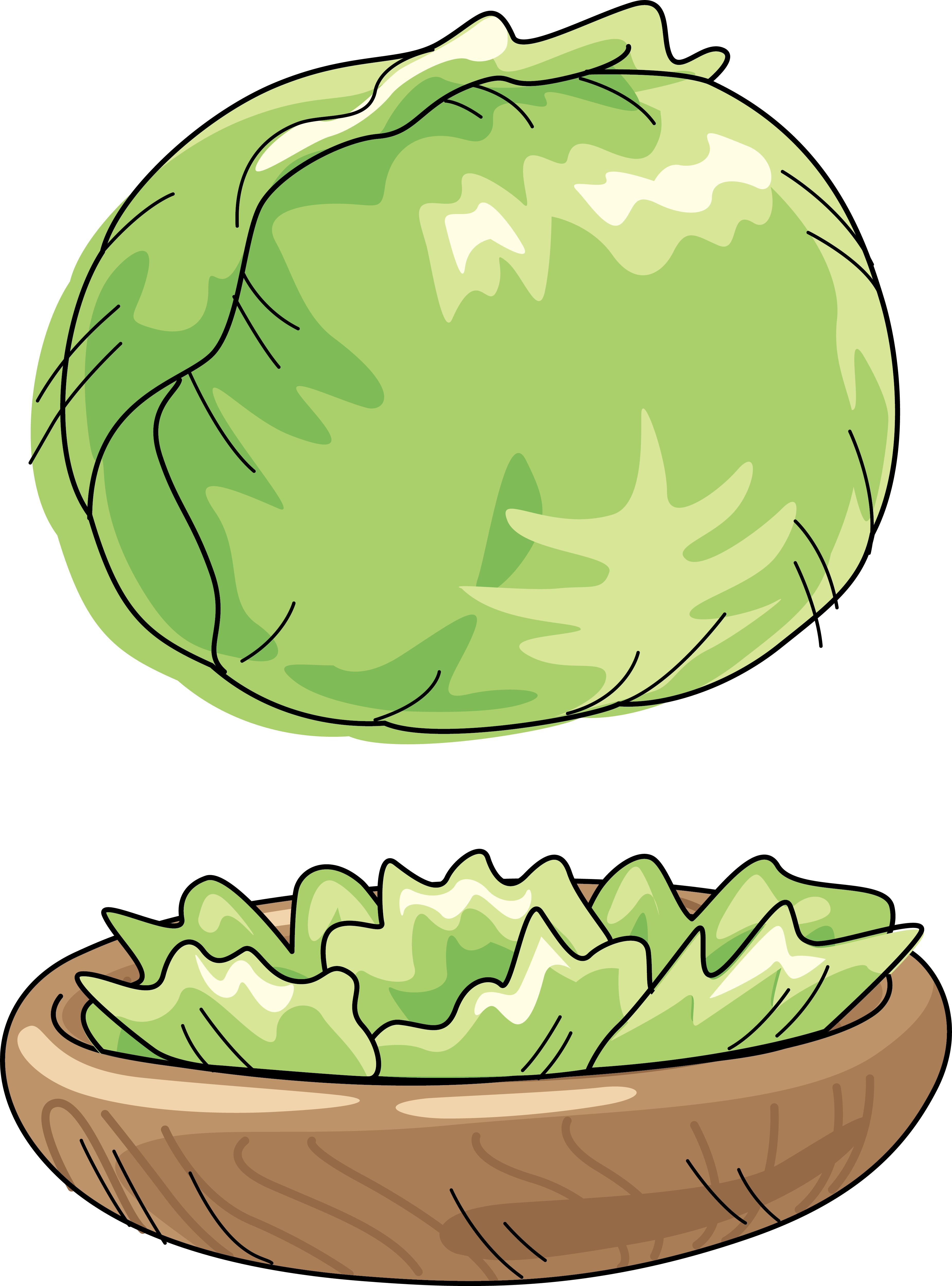 Cabbage cartoon clip art. Watermelon clipart green fruit vegetable