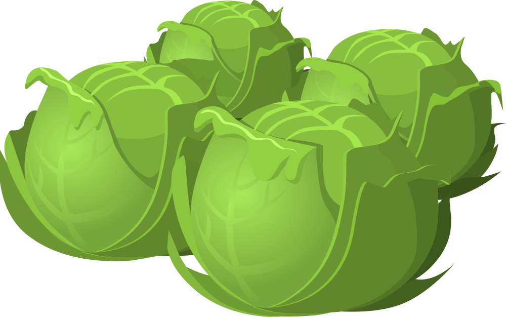 cabbage clipart green food