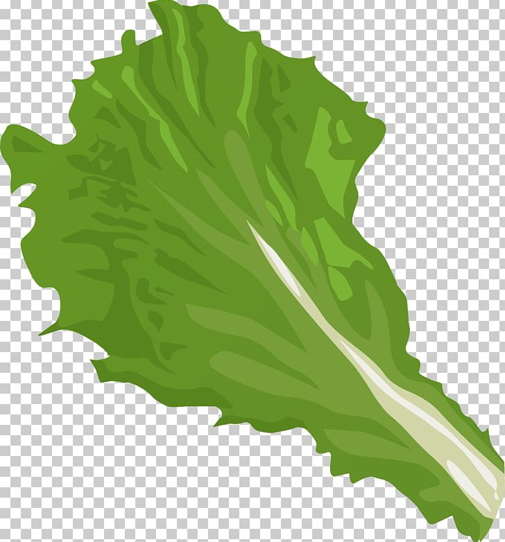 Cabbage clipart head lettuce. Iceberg romaine vegetable png