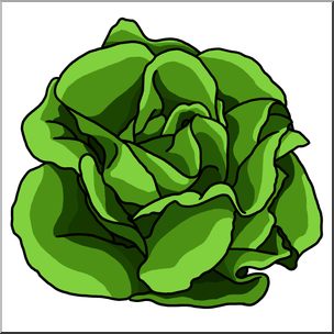 Cabbage clipart head lettuce. Free download best on