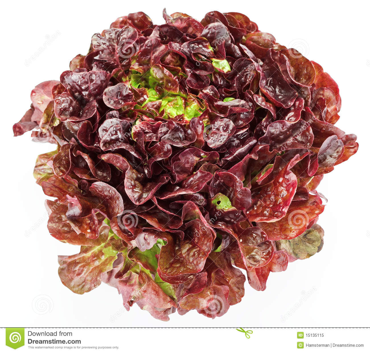 Red . Cabbage clipart head lettuce