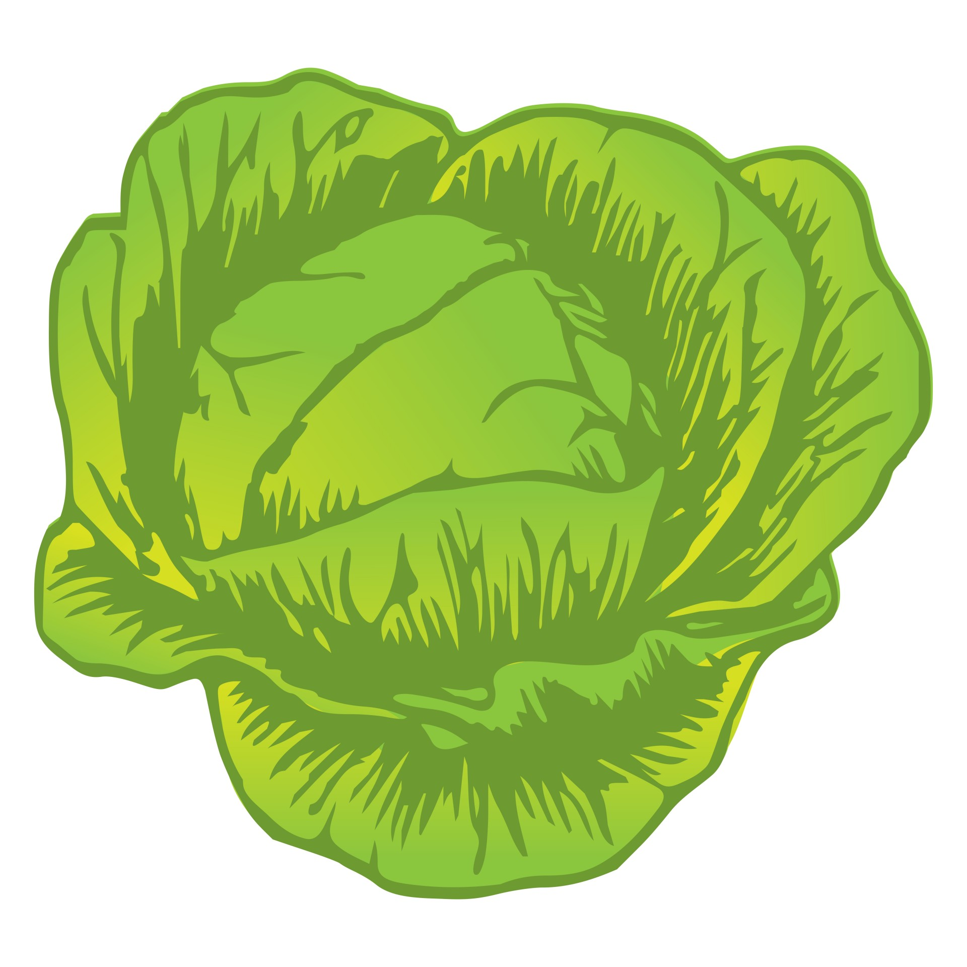 Cabbage clipart head lettuce. Drawing at getdrawings com