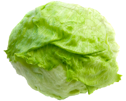Kindersay clip art library. Cabbage clipart head lettuce