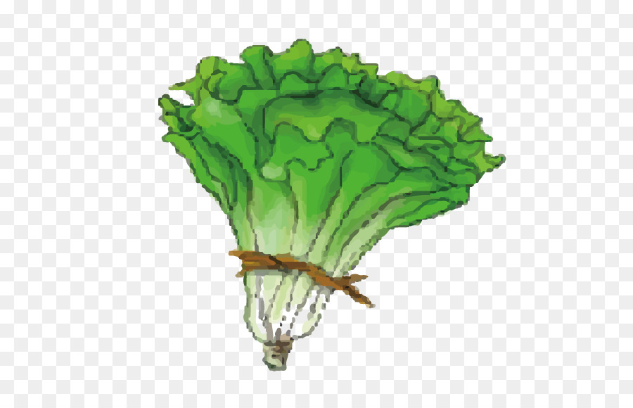 Cabbage clipart head lettuce. Leaf vegetable cartoon green