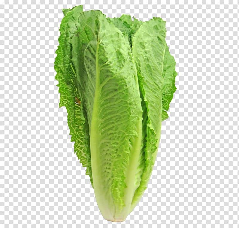 Caesar salad romaine leaf. Cabbage clipart iceberg lettuce