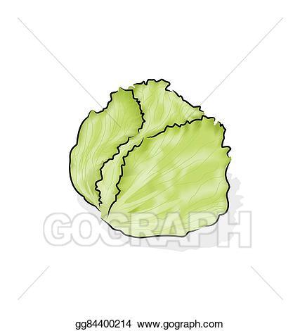 Vector illustration gg. Cabbage clipart iceberg lettuce