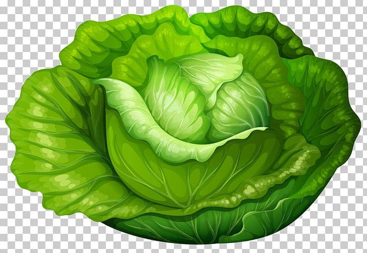 Vegetable png . Cabbage clipart iceberg lettuce