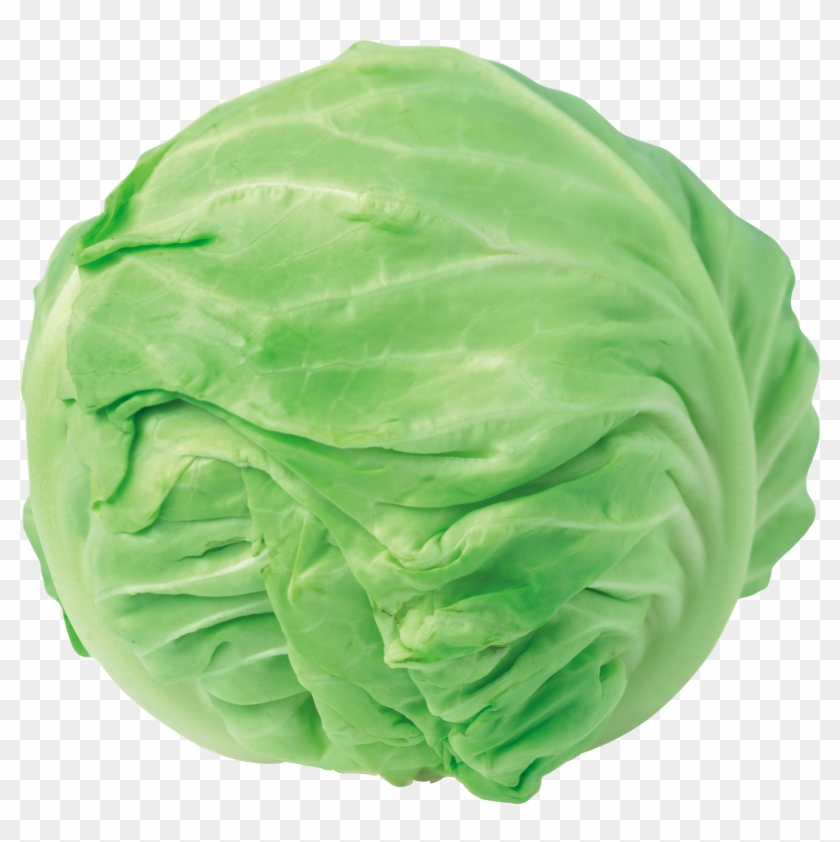 Cabbage clipart iceberg lettuce. Png library stock