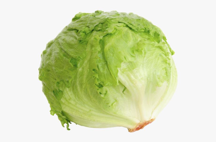 Cabbage clipart iceberg lettuce. Clip art freeuse download