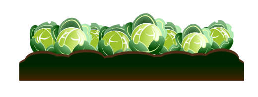 Free to use public. Cabbage clipart illustration