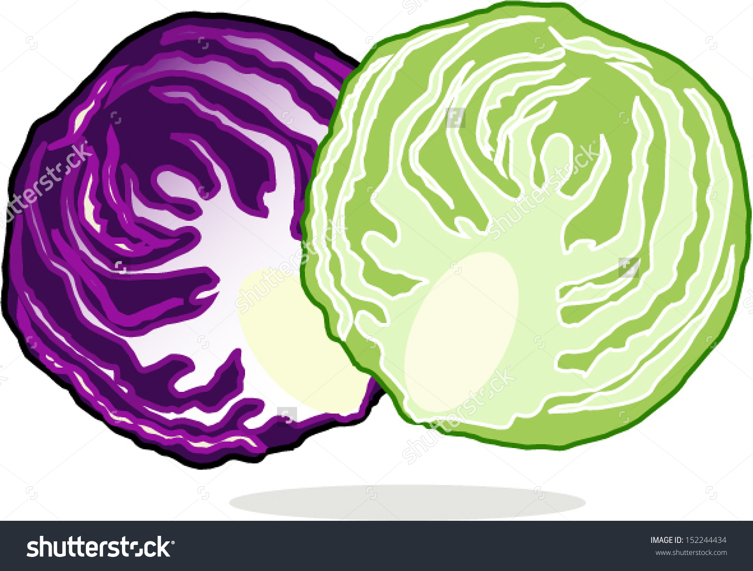Cute clip art of. Cabbage clipart illustration