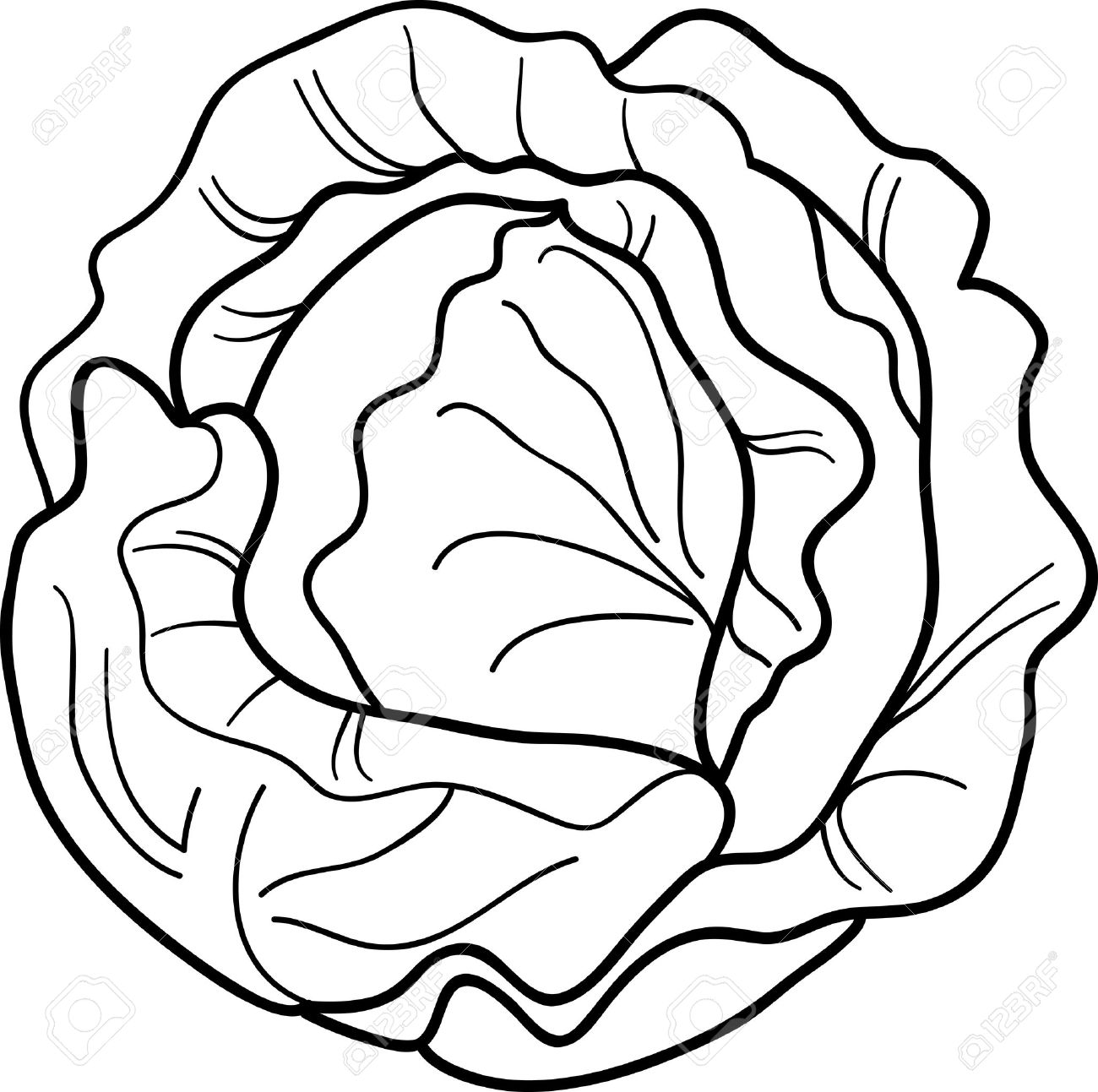Kohl clipground black and. Cabbage clipart illustration