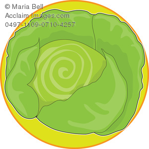 Head of . Cabbage clipart illustration