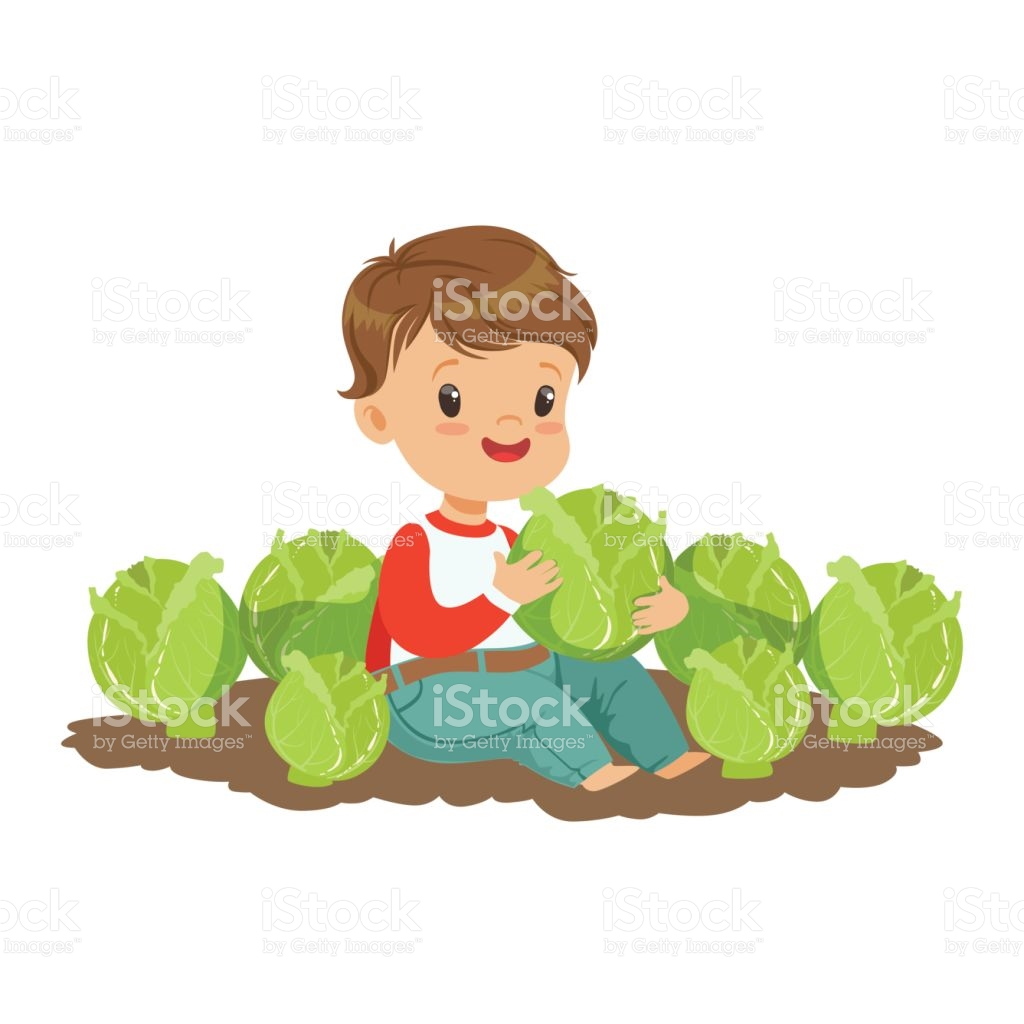 Cabbage clipart illustration. Cute free collection download