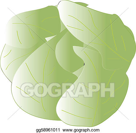 Vector stock gg gograph. Cabbage clipart illustration