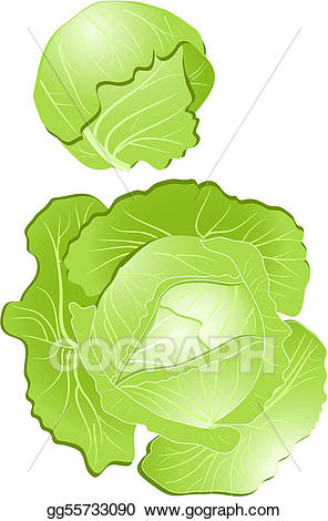 Cabbage clipart illustration. Vector stock gg gograph