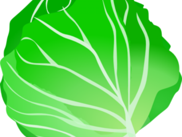 Cabbage clipart leafy vegetable. Lettuce tomato free on