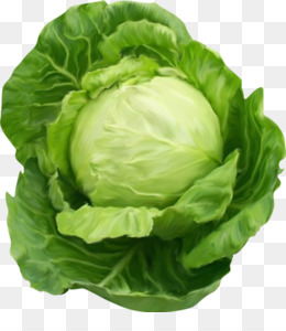 Cabbage clipart leafy vegetable. Chinese romaine lettuce napa