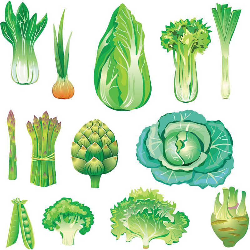 collection of green. Celery clipart drawn