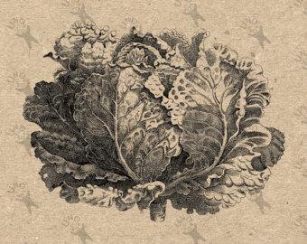 Cabbage clipart leafy vegetable. Salad etsy vintage lettuce