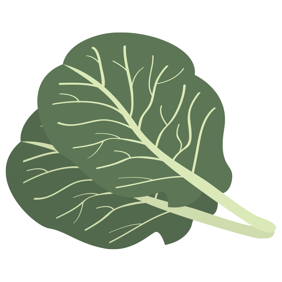Free collards cliparts download. Cabbage clipart leafy vegetable