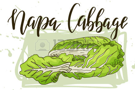 Pinart fresh green . Cabbage clipart leafy vegetable