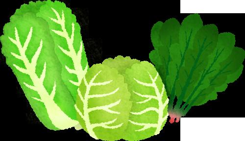 Vegetables free illustrations illustorium. Cabbage clipart leafy vegetable