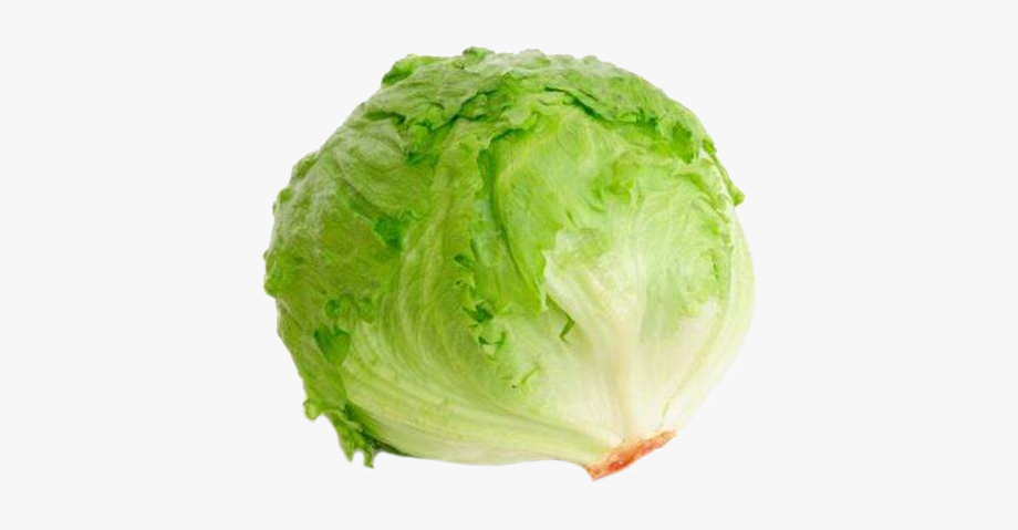Prev fresh free cliparts. Cabbage clipart lettuce leaf