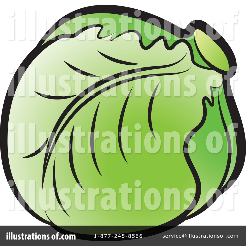 Illustration by lal perera. Cabbage clipart lettuce leaf
