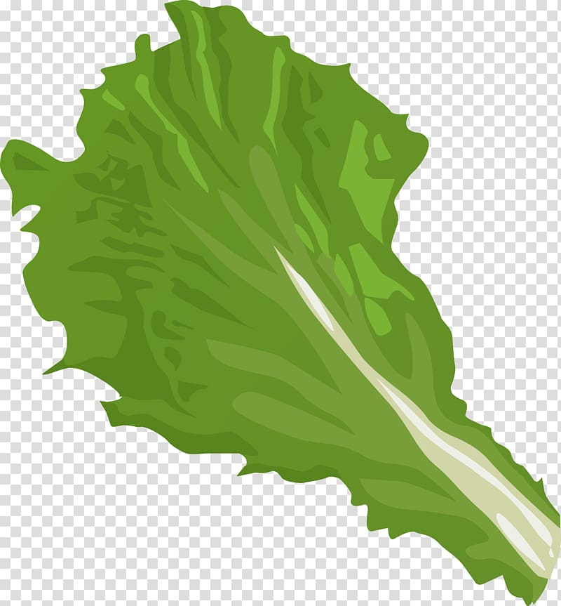 Cabbage clipart lettuce leave. Iceberg romaine vegetable big
