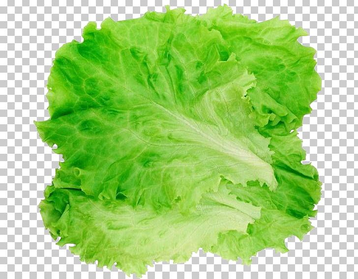 Romaine hamburger salad png. Cabbage clipart lettuce leave