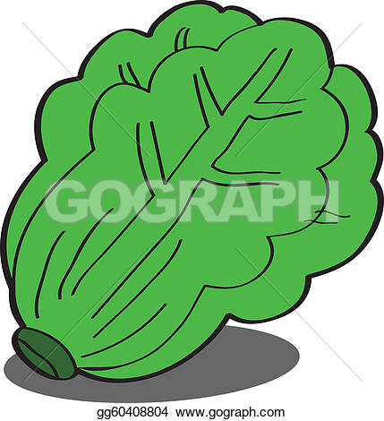 Cabbage clipart lettuce leave. Leaves clipground royalty free