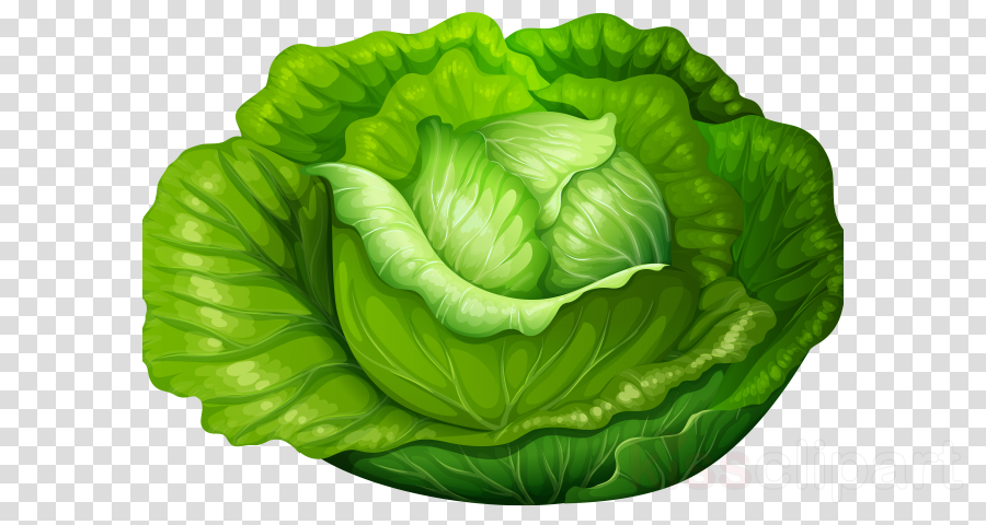 Cabbage clipart lettuce leave. Green leaf vegetable