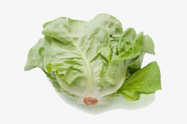 Cabbage clipart lettuce slice. Resolution romaine