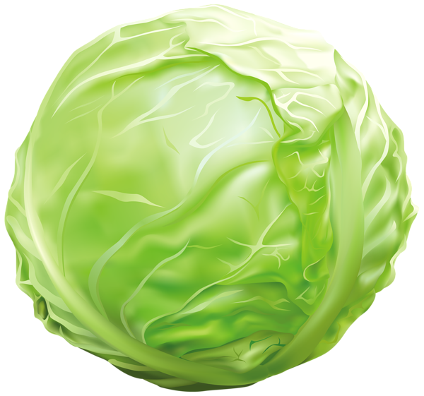 Cabbage png image graphics. Pear clipart fruit seed
