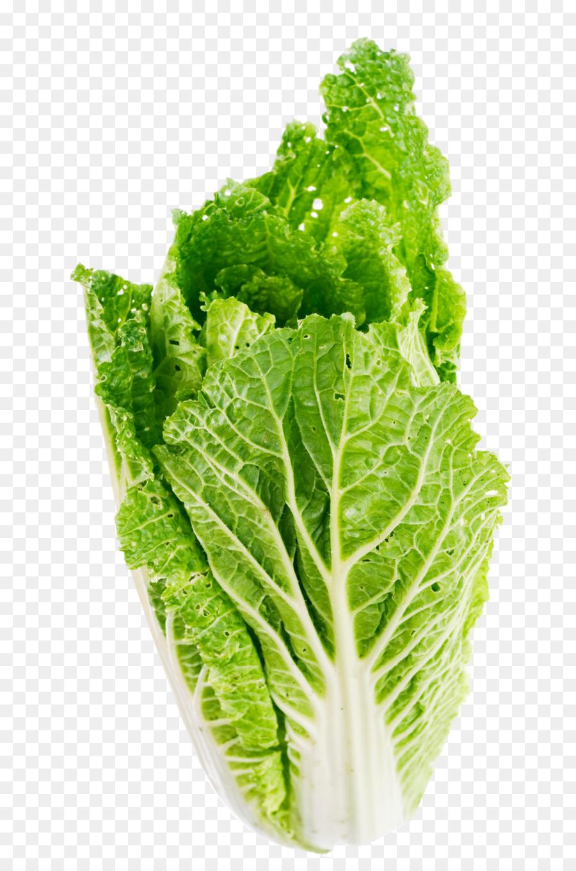 Cabbage clipart lettuce slice. Romaine celtuce butterhead vegetable