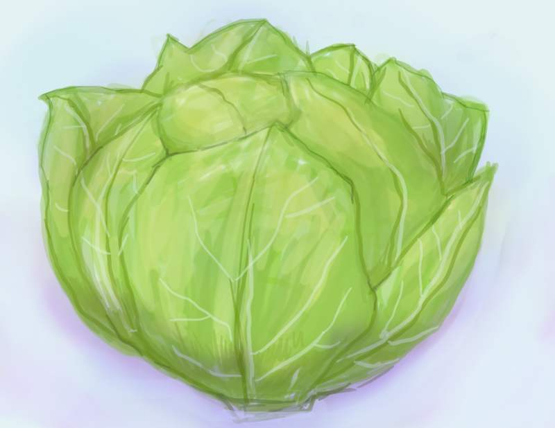 Cabbage clipart lettuce slice. Leaf drawing at getdrawings