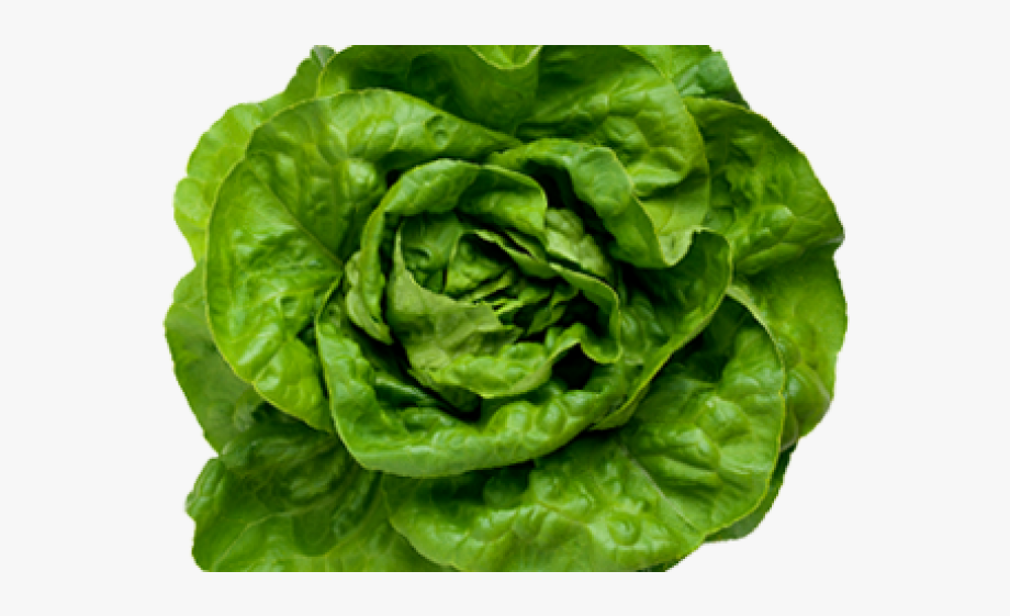 Sad top view png. Cabbage clipart lettuce slice