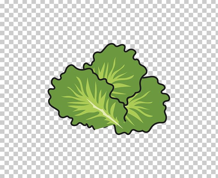 Cabbage clipart lettuce slice. Leaf vegetable tree png