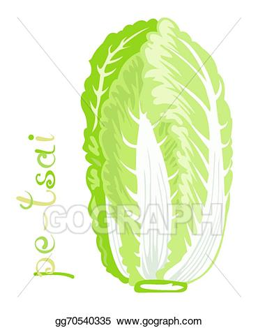 Cabbage clipart napa cabbage. Vector stock chinese illustration