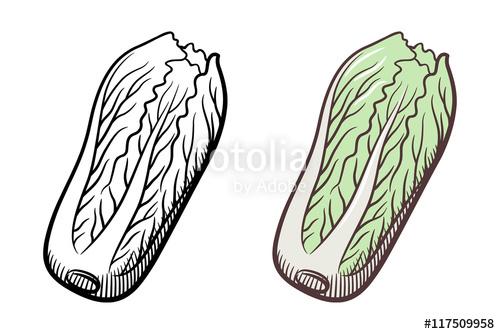 Cabbage clipart napa cabbage. X free clip art