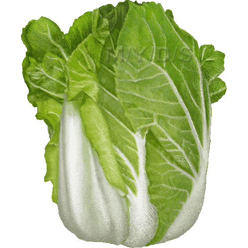 Chinese station . Cabbage clipart napa cabbage