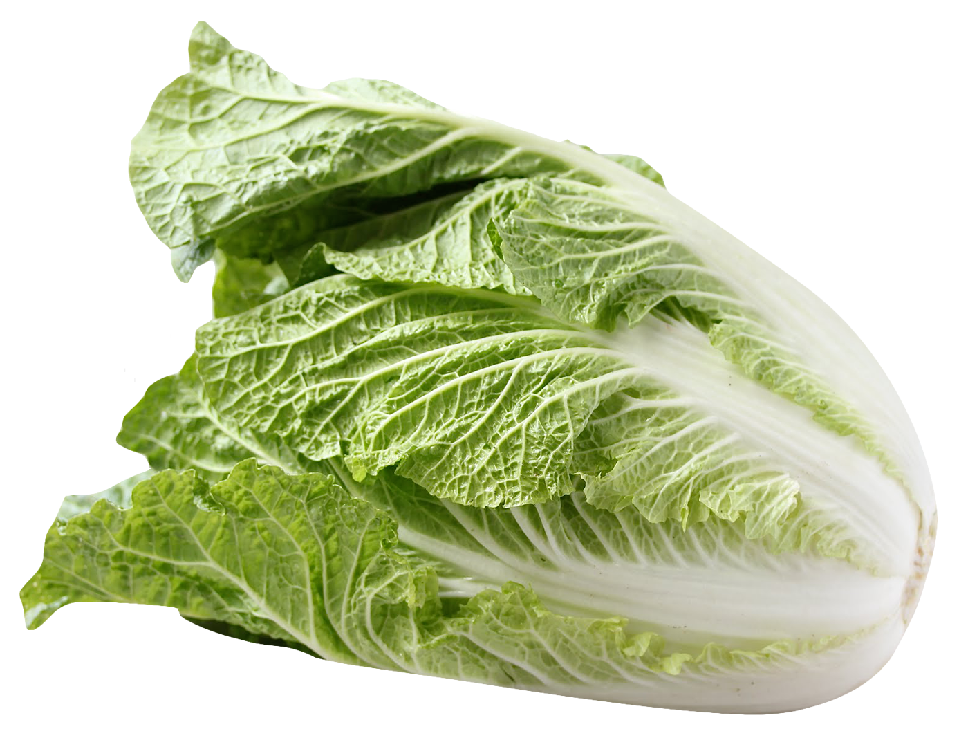 Cabbage clipart napa cabbage. Png image purepng free