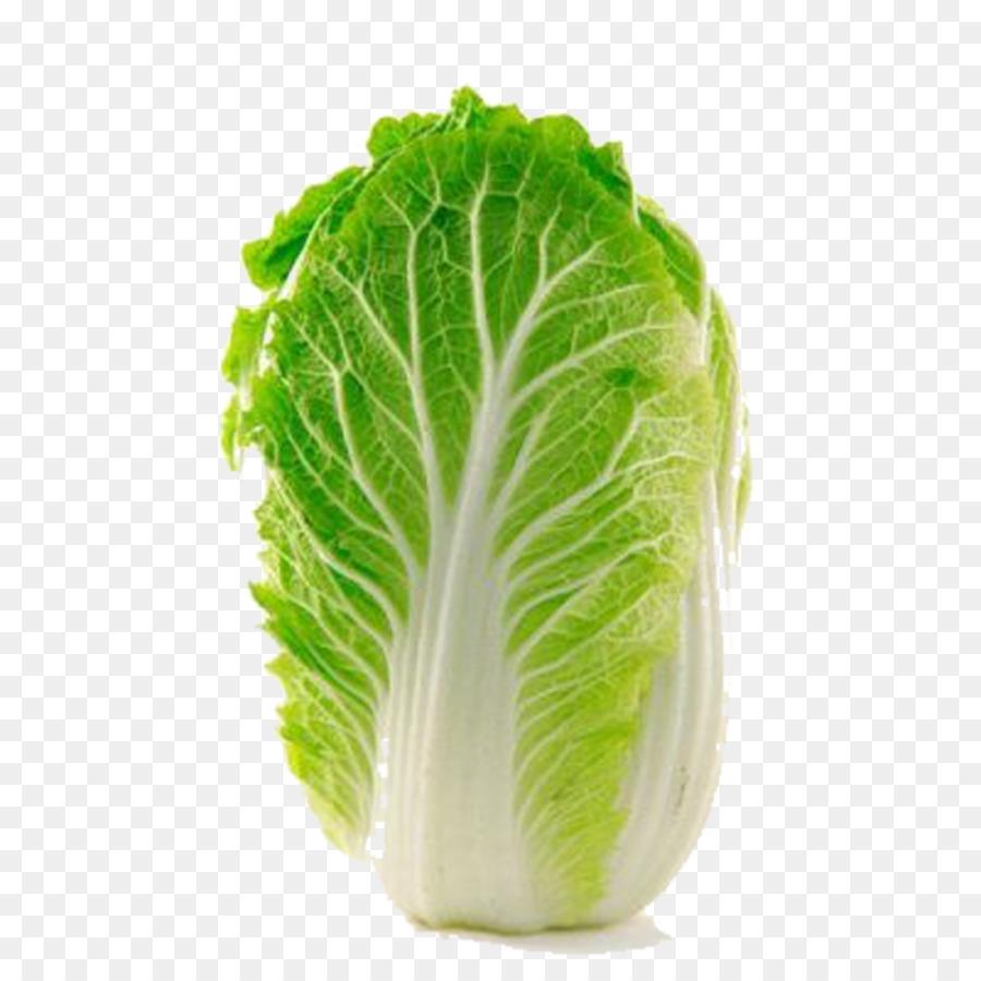 Choy sum kohlrabi chinese. Cabbage clipart napa cabbage