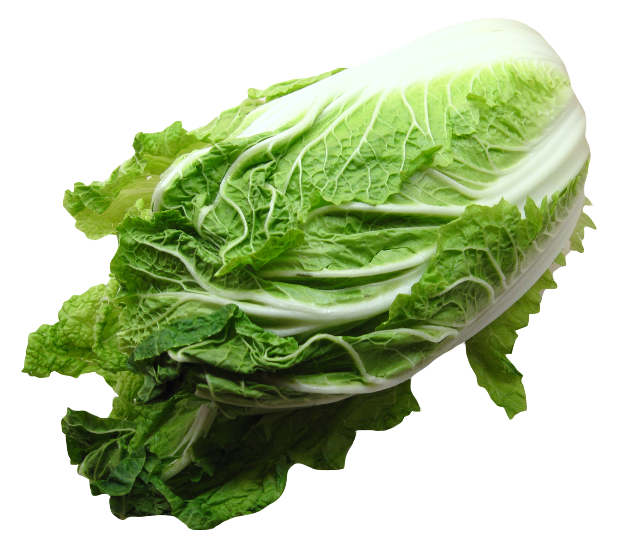 Png image purepng free. Cabbage clipart napa cabbage