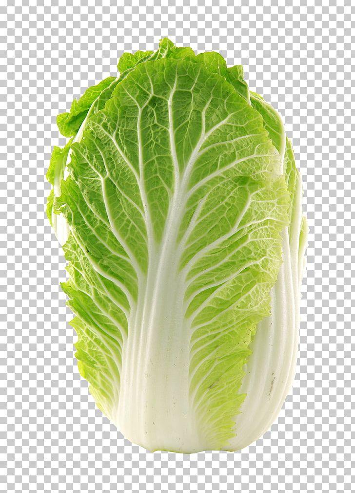 Vegetable chinese glebionis coronaria. Cabbage clipart napa cabbage