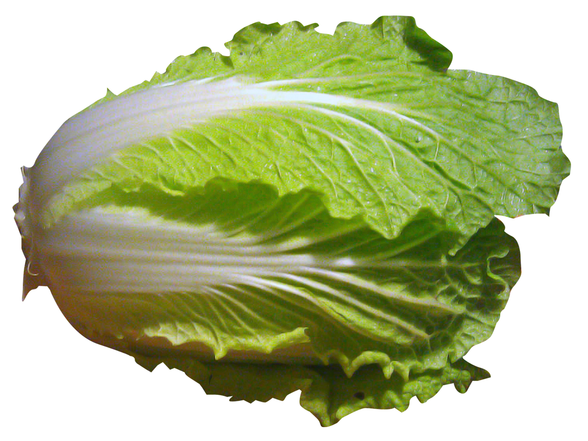 Cabbage clipart napa cabbage. Pin by hopeless on