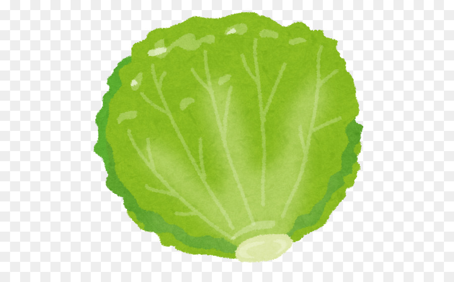 Red leaf food vegetable. Lettuce clipart